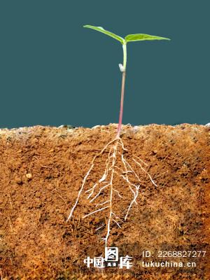 土壤幼苗剖面图图片