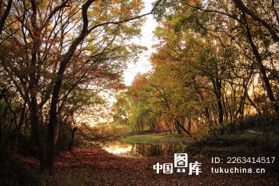 紫金山下秋天的树林