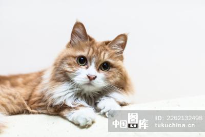 壁纸 动物 猫 猫咪 小猫 桌面 400_267