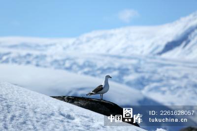 南极风景图片高清